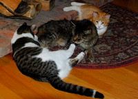 DSC_0317three kitties by the wood stove