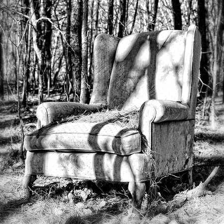 _TDI0893wingback in the woods